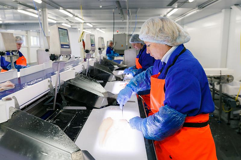Вакансии русская рыбоперерабатывающая компания бухгалтер бухгалтер фрилансер на дому вакансии